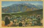 Mt. San Jacinto from Devil's Garden Postcard